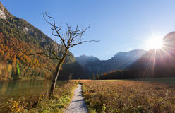 Dead tree and Konigssee lake ,Germany Royalty Free Stock Photo