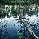 Dead Tree in Lake Stock Photos