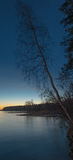 Dead Tree in Lake. Dead Tree in frozen Lake at sunset Stock Photos