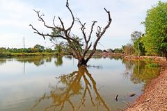 Dead tree in the lake with reflection on blue sky natural background royalty free stock image