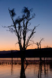 Dead tree in lake silhouetted at dawn Stock Images