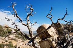 Dead Tree Landscape Horizontal. Horizontal Landscape of a desert/ mountain area with a dead tree and rock in the foreground Royalty Free Stock Images