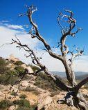Dead Tree Landscape Horizontal. Horizontal Landscape of a desert/ mountain area with a dead tree and rock in the foreground Royalty Free Stock Photo