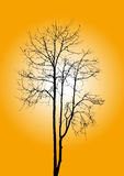 Dead tree without leaves Royalty Free Stock Image