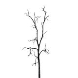 Dead Tree without Leaves Royalty Free Stock Photography