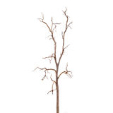 Dead Tree without Leaves stock photo
