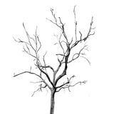 Dead Tree without Leaves stock images