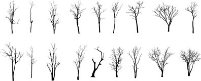 Dead Tree without Leaves Vecto Stock Image