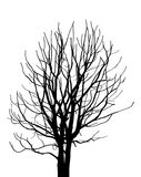 Dead Tree without Leaves Vector Illustration Royalty Free Stock Photos
