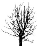 Dead Tree without Leaves Vector Illustration Royalty Free Stock Images