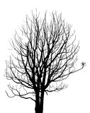 Dead Tree without Leaves Vector Illustration Stock Image