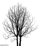 Dead Tree without Leaves Vector Illustration Stock Photos