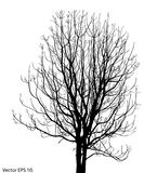 Dead Tree without Leaves Vector Illustration Stock Photography