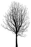 Dead Tree without Leaves Vector Illustration Royalty Free Stock Photo