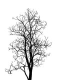 Dead Tree without Leaves Vector Illustration Sketched Royalty Free Stock Photography
