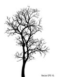 Dead Tree without Leaves Vector Illustration Sketched Royalty Free Stock Photos