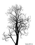 Dead Tree without Leaves Vector Illustration Sketched. EPS 10 Stock Photos