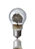 Dead Tree in Lightbulb Stock Photo