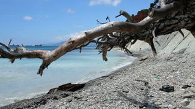 Dead tree. On a littered beach stock footage