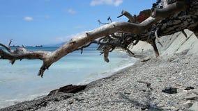 Dead tree stock footage
