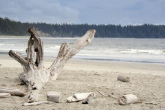 Dead Tree on Long Beach Stock Images
