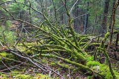 Dead tree lying down Stock Image