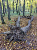 Old dead tree lying in the autumn forest Stock Photo