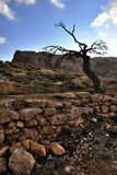 Dead Tree at Maaloula Royalty Free Stock Images