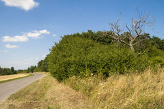 The Dead tree. Dead tree in the middle of the bushes next to a road Royalty Free Stock Photos