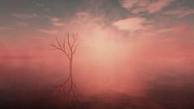 Dead tree in misty lake with cloudy sky at sunrise. Stock Photography