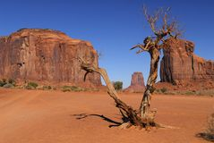 Dead tree in Monument Valley Stock Images