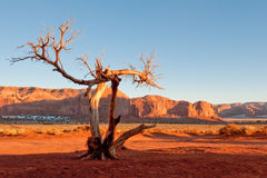Dead tree in Monument Valley Royalty Free Stock Image