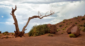 Dead tree at Monument Valley Stock Photos