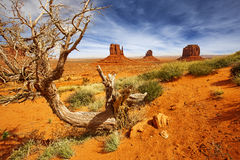 Dead tree in monument valley Stock Photography
