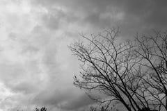 Dead Tree Moody Sky. And Birds Royalty Free Stock Photo