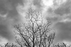Dead Tree Moody Sky. And Birds Royalty Free Stock Images