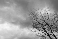 Dead Tree Moody Sky. And Birds Stock Images