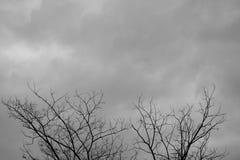 Dead Tree Moody Sky. And Birds Stock Photos
