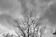 Dead Tree Moody Sky. And Birds Royalty Free Stock Image