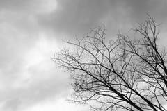 Dead Tree Moody Sky. And Birds Stock Image