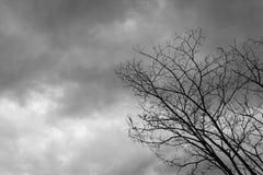 Dead Tree Moody Sky. And Birds Stock Photo