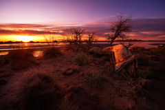 Dead tree in the Morning Royalty Free Stock Image