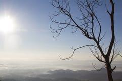 Dead tree on mountain Stock Image