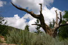 Dead Tree in a Mountain Garden Royalty Free Stock Images