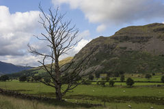 Dead tree in a mountain landscape Royalty Free Stock Photos