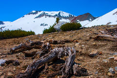 Dead tree on the mountain ridge in Lassen Volcanic Park. Stock Photography