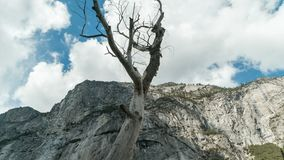 Dead tree mountain time-lapse