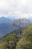 Dead tree on mountainous rainforest Stock Photography