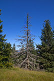 A dead tree in the mountains Stock Image