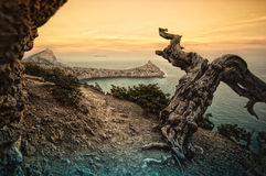Dead tree in the mountains by the sea Stock Photos